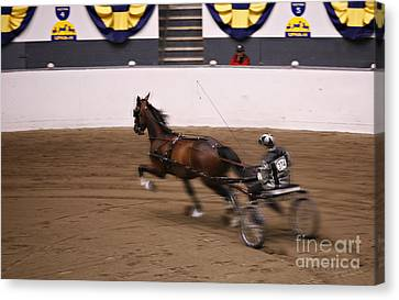Canvas Print featuring the photograph Road Pony At Speed by Carol Lynn Coronios