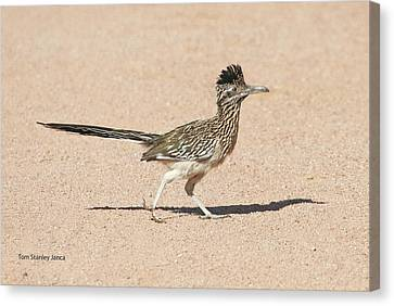 Canvas Print featuring the photograph Road Runner On The Road by Tom Janca