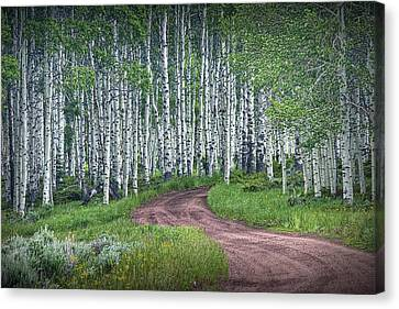 Road Through A Birch Tree Grove Canvas Print by Randall Nyhof