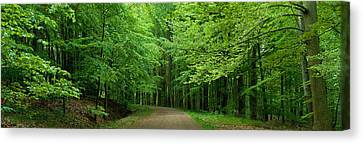 Road Through A Forest Near Kassel Canvas Print by Panoramic Images