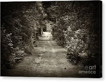 Road Through Forest Canvas Print by Elena Elisseeva