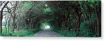 Road Through Trees Marion County Canvas Print by Panoramic Images
