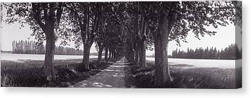 Road Through Trees, Provence, France Canvas Print by Panoramic Images