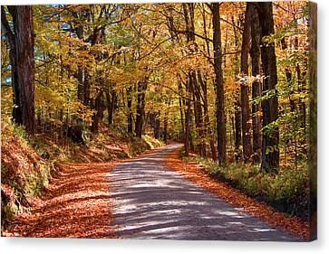 Canvas Print featuring the photograph Road Through Woods by Larry Landolfi