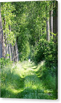 Road To Bruges Canvas Print by Carol Groenen