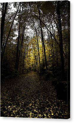 Road To Cary Lake II Canvas Print