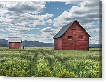 Road To Nowhere Canvas Print by Sandra Bronstein