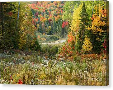 Road To Quill Hill Canvas Print