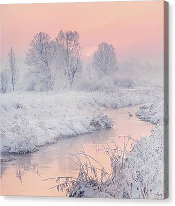 Snowy Trees Canvas Print - Road To The Sun by Katarzyna Gritzmann