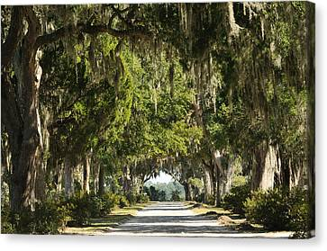 Canvas Print featuring the photograph Road With Live Oaks by Bradford Martin