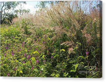 Canvas Print featuring the photograph Roadside Blooms by Jose Oquendo