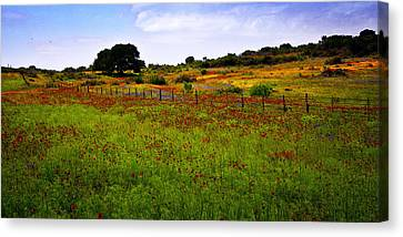 Roadside Flowers Canvas Print by Tamyra Ayles