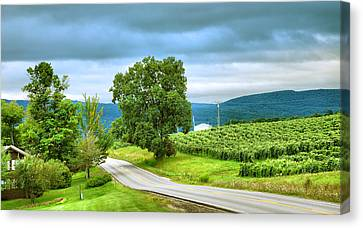 Pastoral Vineyard Canvas Print - Roadside Vineyard by Steven Ainsworth