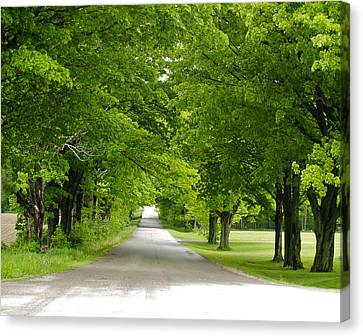 Canvas Print featuring the photograph Roadway by Susan Crossman Buscho