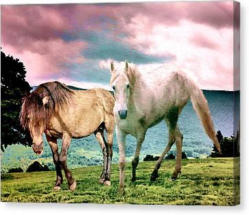 Roaming Stallions Canvas Print