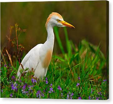 Roaming Through The Field Canvas Print by Tony Beck