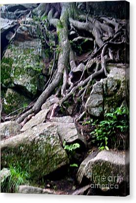 Roaming Tree Roots Canvas Print