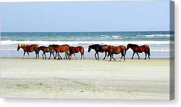 Roaming Wild And Free Canvas Print