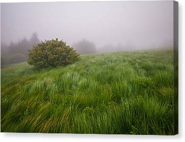 Roan Mountain Appalachian Trail Landscape Photography Windswept Canvas Print by Dave Allen