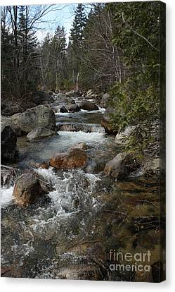 Brook Trout Image Canvas Print - Roaring Brook by Joseph Marquis