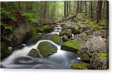 Roaring Brook Canvas Print by Patrick Downey