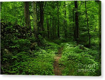 Canvas Print featuring the photograph Roaring Fork Trail by Debbie Green