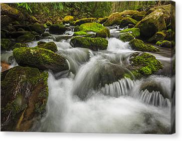 Roaring Forks Canvas Print by Mike Lang