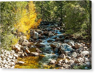 Roaring River 1-7782 Canvas Print