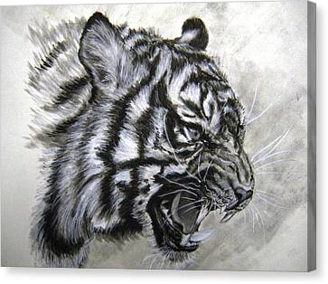 Roaring Tiger Canvas Print by Lori Ippolito