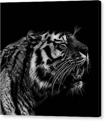 Roaring Tiger Canvas Print by Martin Newman