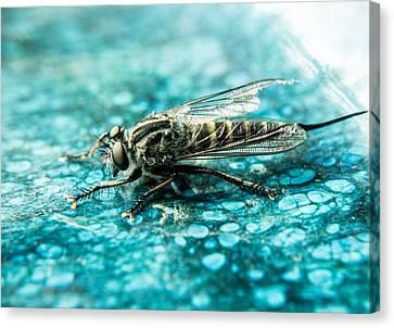 Robber Fly Pm Blue Ceramic Plate Canvas Print by Douglas Barnett