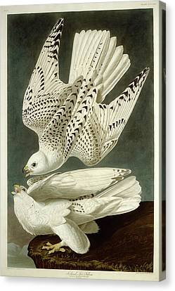Robert Havell After John James Audubon, Iceland Or Jer Canvas Print