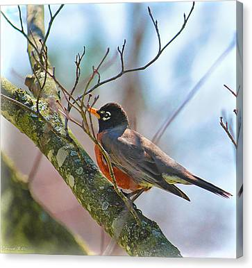 Robin Canvas Print by Bonnie Willis