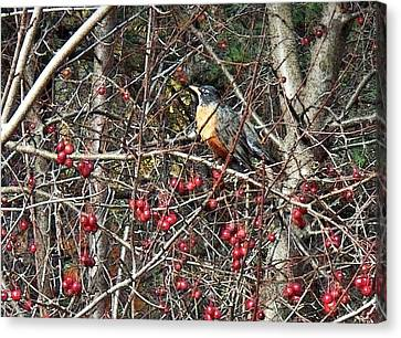 Robin In The Crab Apple Trees Canvas Print by Joy Nichols