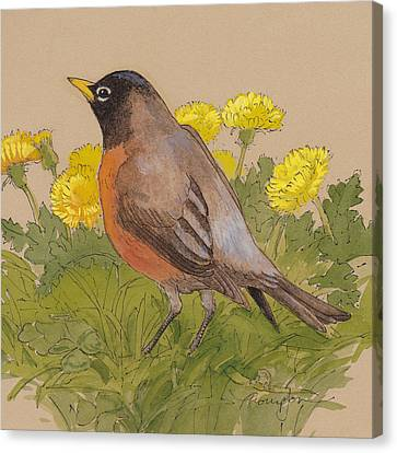 Robin In The Dandelions Canvas Print by Tracie Thompson