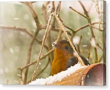 Robin In Winter Canvas Print