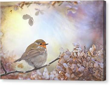Pastel Canvas Print - Robin On Dreams by