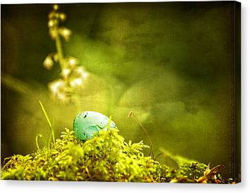 Canvas Print featuring the photograph Robin's Egg On Moss by Peggy Collins