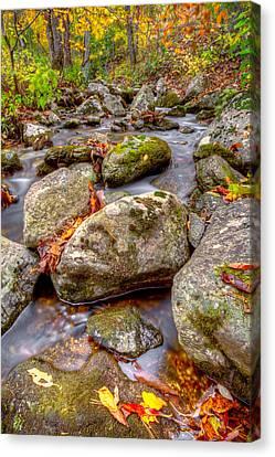 Fallen Leaf On Water Canvas Print - Rock Community by Thomas Szajner