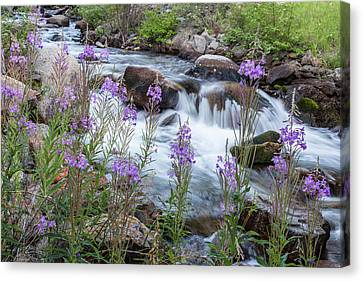 Rock Creek In The Pioneer Mountains Canvas Print