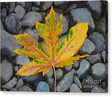 Rock Creek Leaf Canvas Print by Chalet Roome-Rigdon