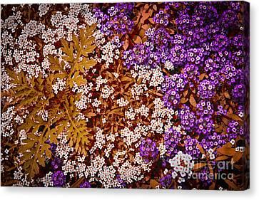 Rock Cress Flowers Canvas Print
