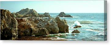 Rock Formations At A Coast, Bird Rock Canvas Print by Panoramic Images