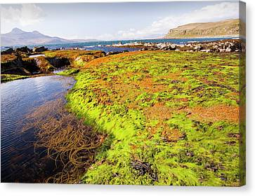 Sea Weed Canvas Print - Rock Formations At The Bay Of Laig by Ashley Cooper