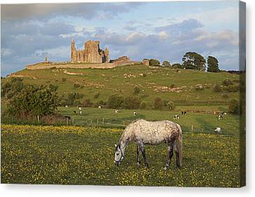 Rock Of Cashel_ County Tipperary Canvas Print by Carl Bruemmer