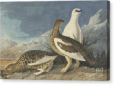 Heron Canvas Print - Rock Ptarmigan  by Celestial Images