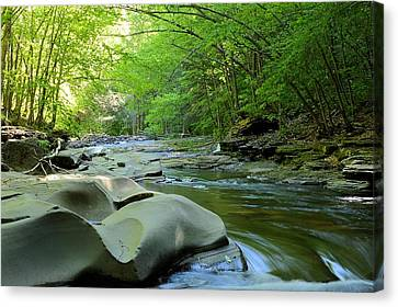 Rock Run #1 - Loyalsock State Forest Canvas Print
