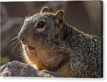 Canvas Print featuring the photograph Rock Squirrel by Beverly Parks