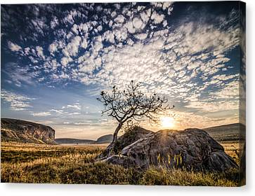 Rock Tree And Rising Sun Canvas Print by Mike Gaudaur