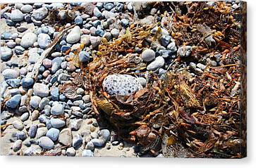Rock Weed Canvas Print